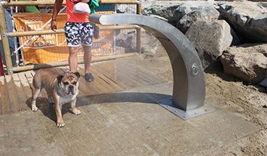 Ducha para perros showy instalada